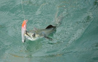 spanish mackerel fishing